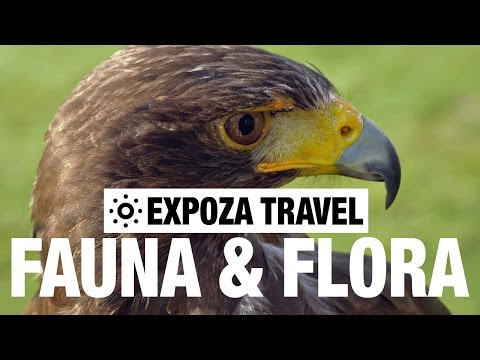 Fauna & Flora (Europe) Vacation Travel Guide