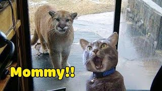Funniest Animals 2020 Compilation  Awesome Funny Dogs and  Cats