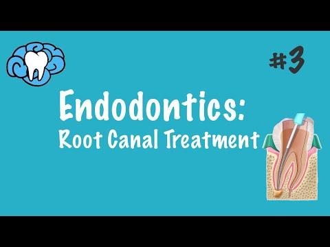 Endodontics | Root