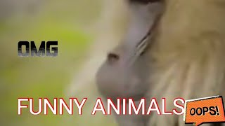 WORLD'S MOST Funny Animals