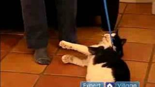 Keeping Your Cat Fit & Healthy : How to Walk a Cat on a Leash