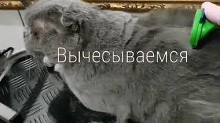Вычесывание, груминг котов и собак🐾 Запорожье. Стрижка