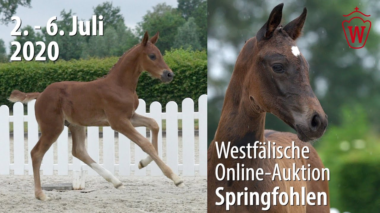10th Westphalian Online-Auction - Showjumping Foals