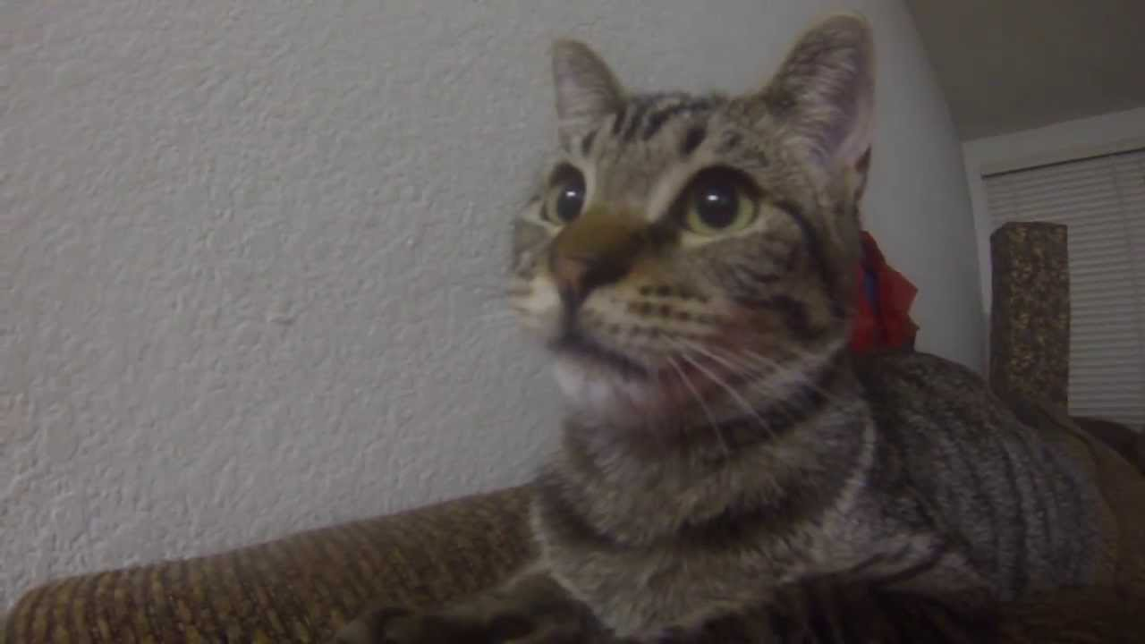 Cat Makes Weird Clicking Noise