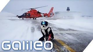 Der Security-Hund von Traverse City | Galileo Lunch Break