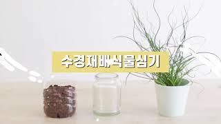 요즘 인기 준쿠스 수경재배 식물