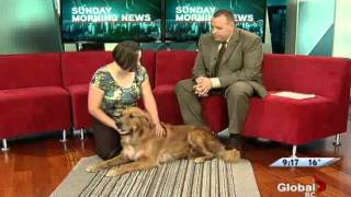 Dog Massage Interview -jems Animal Massage Services On Global Tv