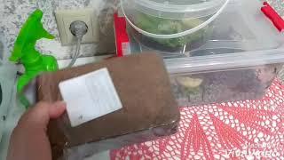 грунт для улиток и как правильно его подготовить для закладки в террариум?