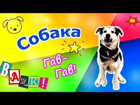- сайт для любителей собак