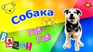 Домашние животные для детей. Собака лает. Гав. Dog barking.