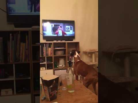 Boxer Can't Help Admiring John Lewis Advert 2016