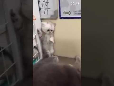 Scaredy cat. :(