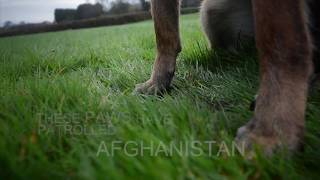 Adopt a retired Military Dog