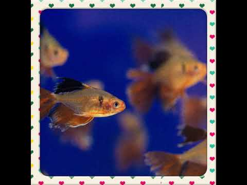 SLIDESHOW OF FISHES