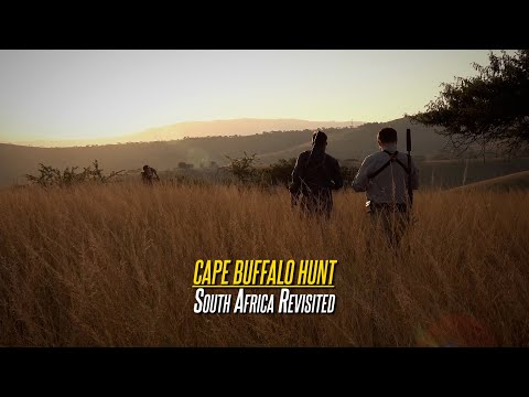 South Africa Revisited – Cape Buffalo Hunt