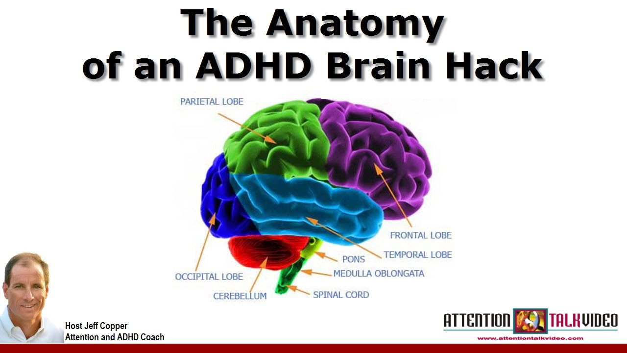 Adhd Tools  Attention And Brain Hacks
