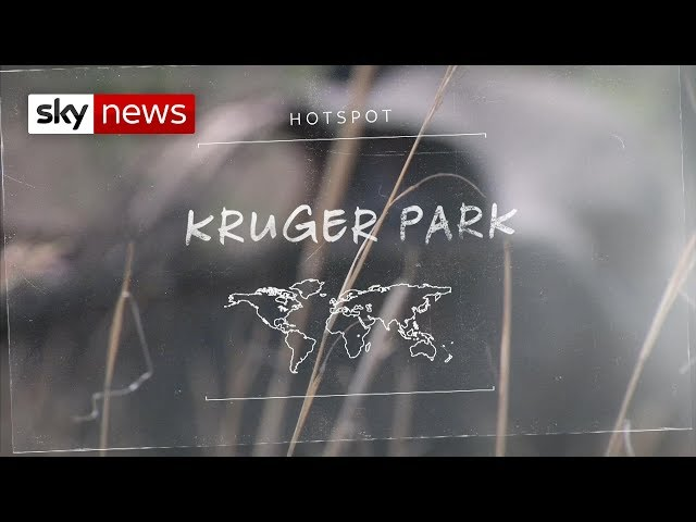 Hotspots: The race to save Black Rhinos
