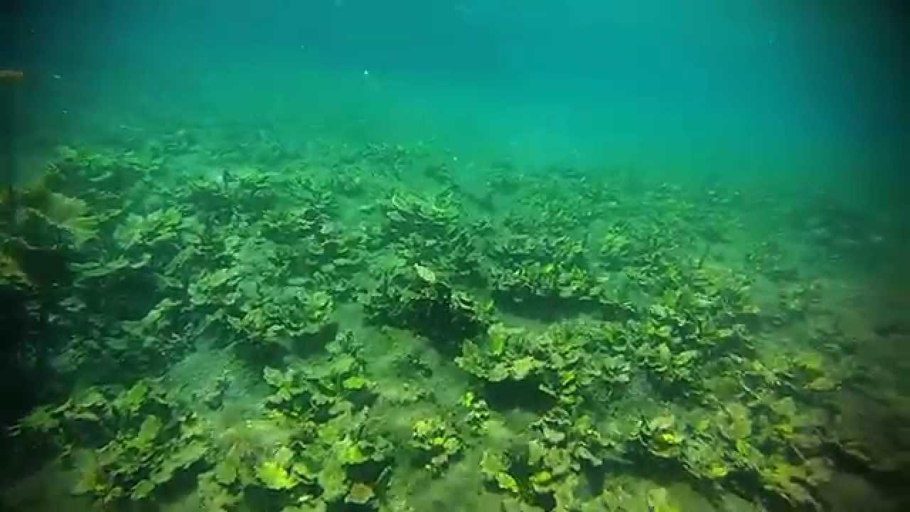 Rio verde san luis potosi mexico