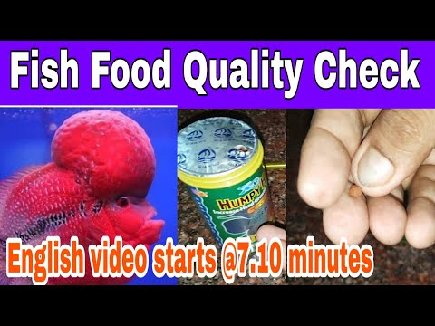 How To Check Fish Food Quality?