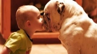 Best Funny Animals & Babies Compilation 2016 Part 2► Funny Cats & Dogs with Babies Try Not to Laugh!