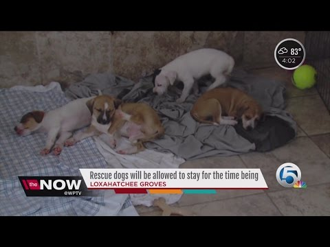 Rescue dogs will be allowed to stay for the time being