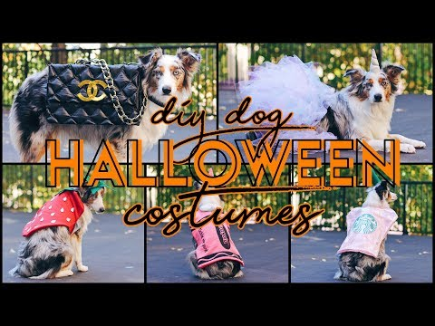 5 Easy DIY Dog Costumes! (For $15 Or Less & NO SEW!)