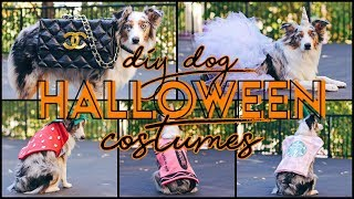 5 Easy DIY Dog Costumes! (For $15 or Less u0026 NO SEW!)