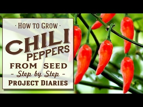 how to grow seeds fast