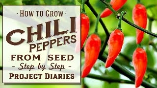 ★ How to: Grow Chili Peppers from Seed (A Complete Step by Step Guide)