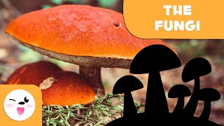 What are fungi? - The Fungi Ki…