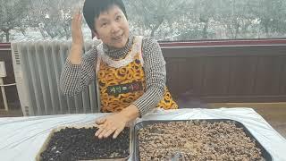 시골농가 서리태콩으로 흰깨와검정깨를 활용한 영양덩어리 …