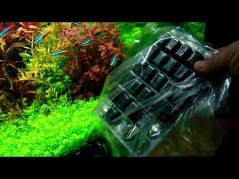 Akvarisztika kezdőknek 7 (Algák az akváriumban, algásodás okai)
