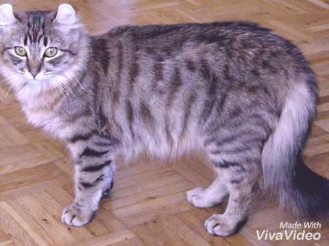 🐾💗Tutte le razze feline♡ - All cats breeds🐱