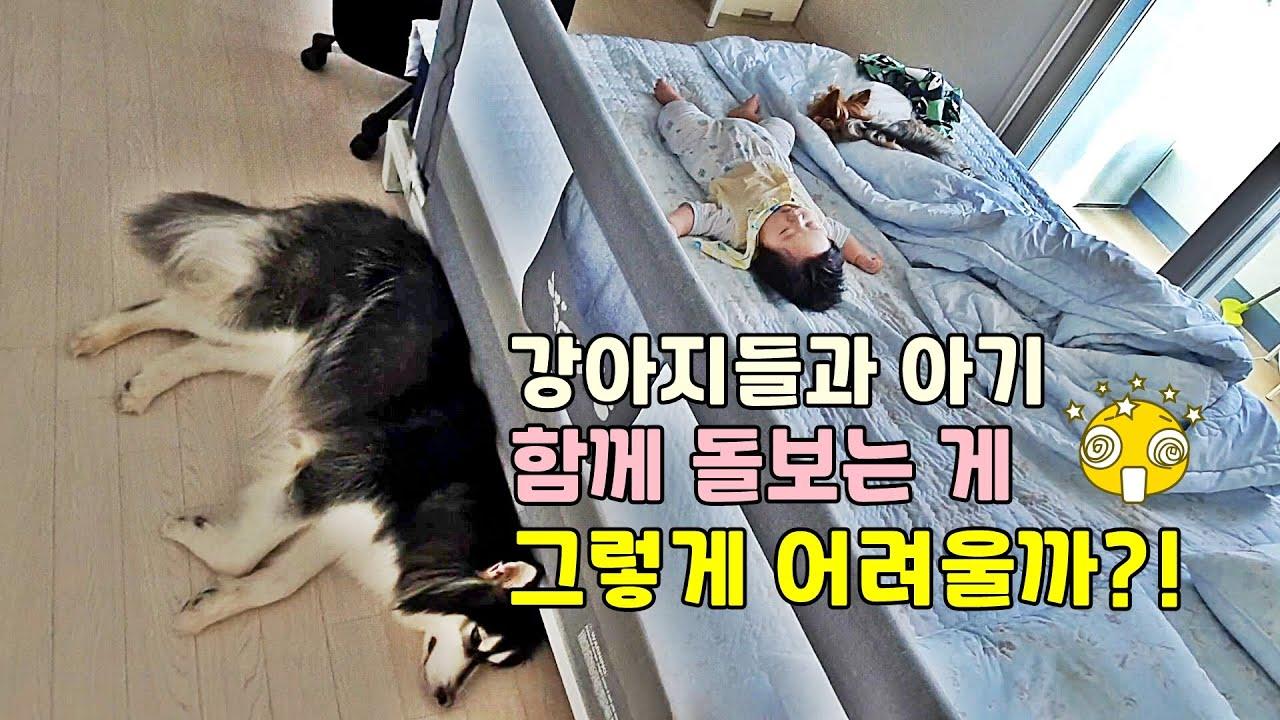 강아지들과 아기 키우는 남편의 하루ㅣ육아! 아직은 할만하다!