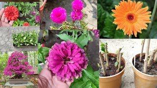 इस महीने गर्मियों के पौधे की तैयारी करें। क्या-क्या करना है जानिए