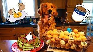 Funny Dog Earl Makes Breakfast!