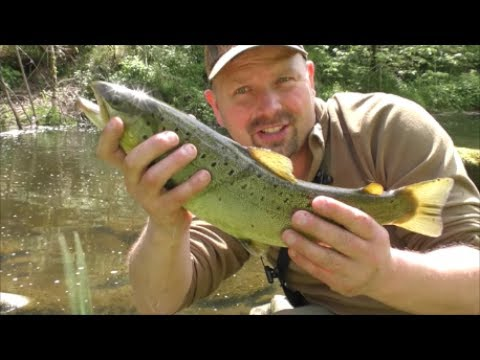 #12 (May) Dry Fly Trout Fishing - River Derwent