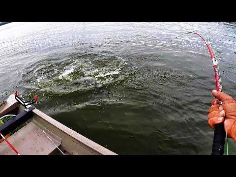 Dam Fishing For Catfish
