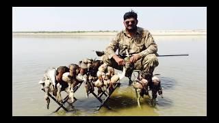 Download Video hunting ducks with shotgun - HD MP3 3GP MP4