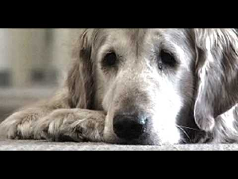 Sarah-McLachlan-Feet-2664663 Sarah Mclachlan Animal Cruelty Video