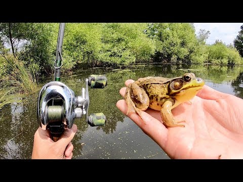 Pike eats baby duck- Fairbanks, AK from YouTube · Duration:  1 minutes 8 seconds