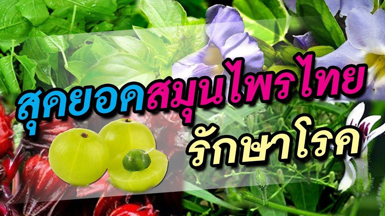 สุดยอดสมุนไพรไทยรักษาโรค