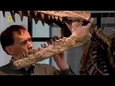 Пути Эволюции  Сухопутные Киты   National Geographic HD 2017