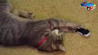 Трек для машинок  Кошка