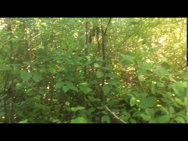 Filosofía en el bosque 31. Alucinaciones Parte 2.