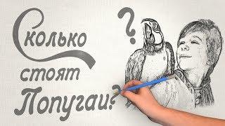 Сколько стоит попугай? Цены и особенности видов попугаев.