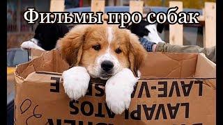 Фильмы про собак (часть 1)