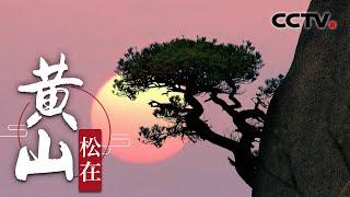 《黄山》松在 | CCTV纪录 - YouTube
