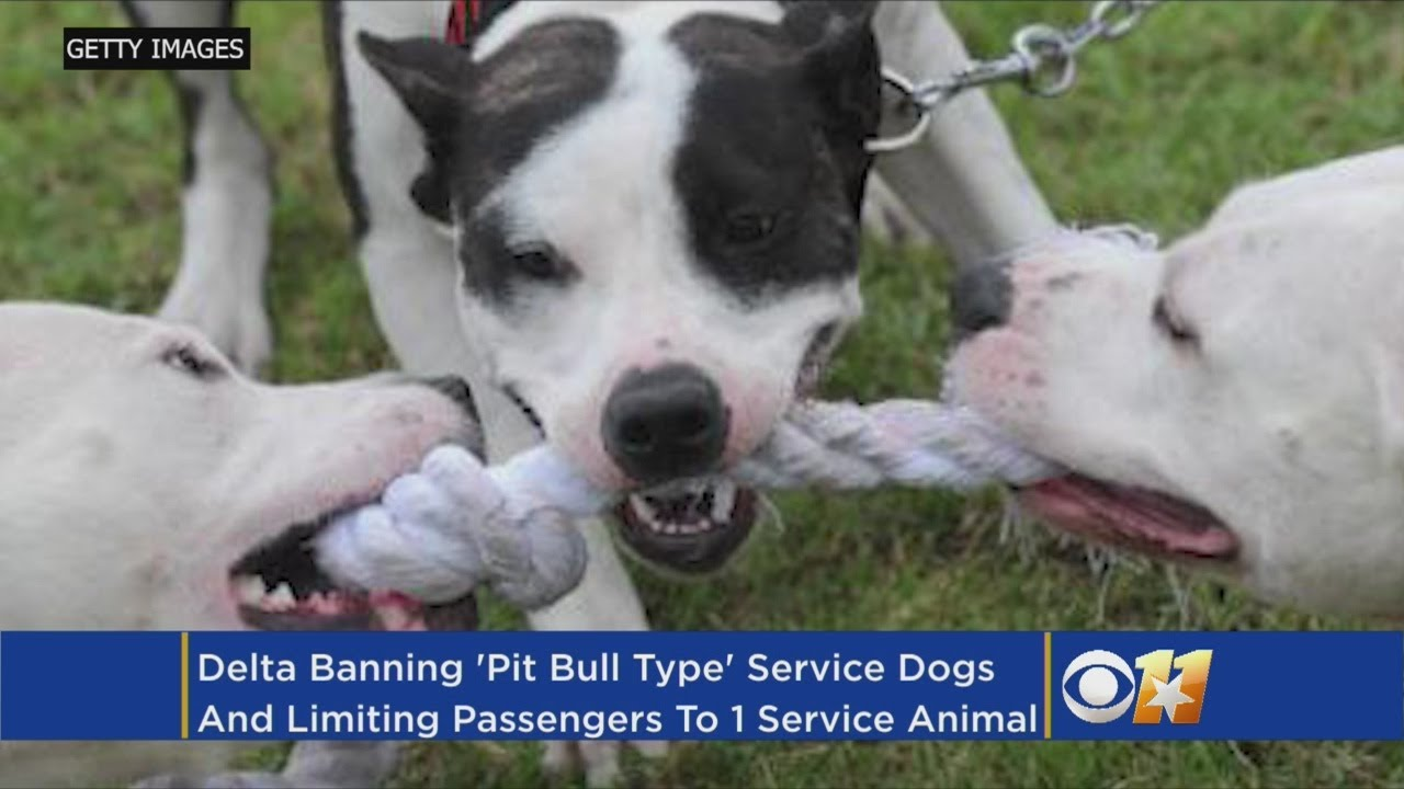 an argument against the banning of pit bull due to the negative portrayal of the media We provide excellent essay writing service 24/7 enjoy proficient essay writing and custom writing services provided by professional academic writers.