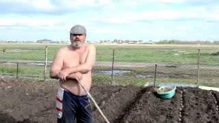 посадка картофеля, проверяем новый метод (весна)(Ну собственно результаты пока не известны, будем снимать осенью урожай. а с выкладыванием видео запоздал...., 2013-06-03T06:32:41.000Z)